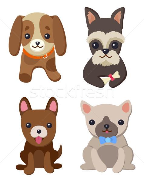 Stock fotó: Kutyák · kiskutyák · szett · poszter · gyűjtemény · díszállatok