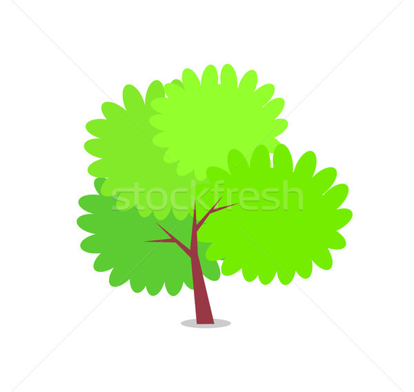 Green Bushy Tree with Big Round Branches Vector Stock photo © robuart