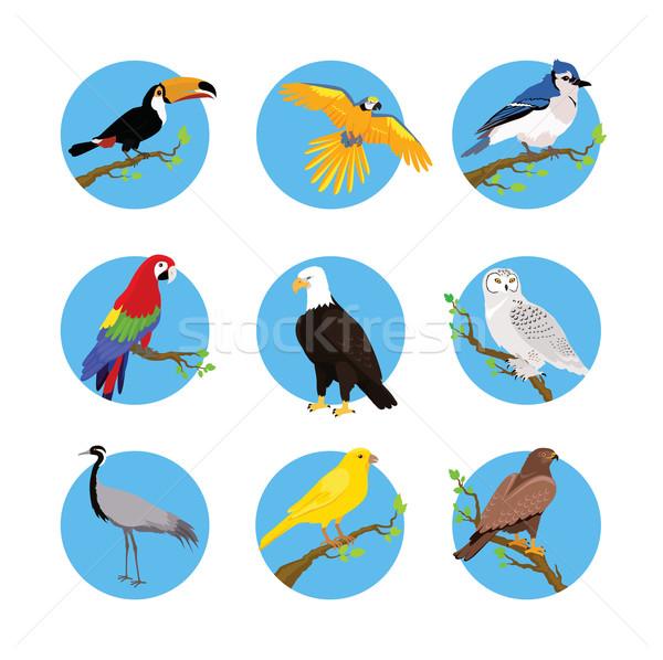 Collectie vogels ontwerp vliegen uil Stockfoto © robuart