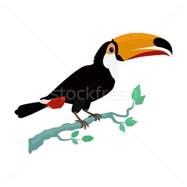 Vogel ontwerp vector dieren regenachtig amazone Stockfoto © robuart