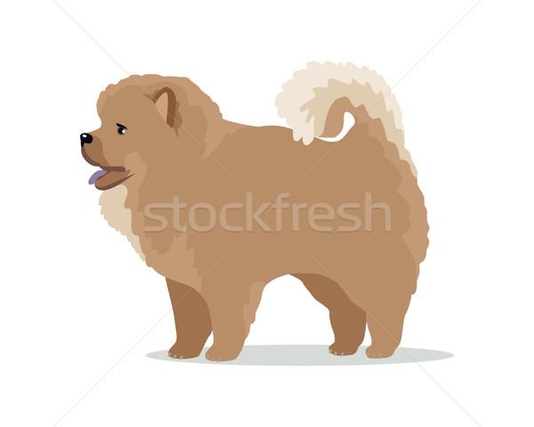 Hondenras vector ontwerp illustratie huisdier Stockfoto © robuart