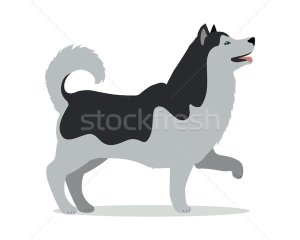Stand blanco blanco negro perro icono logo Foto stock © robuart