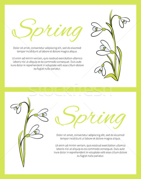 Spring Posters Set Green on Vector Illustration Stock photo © robuart