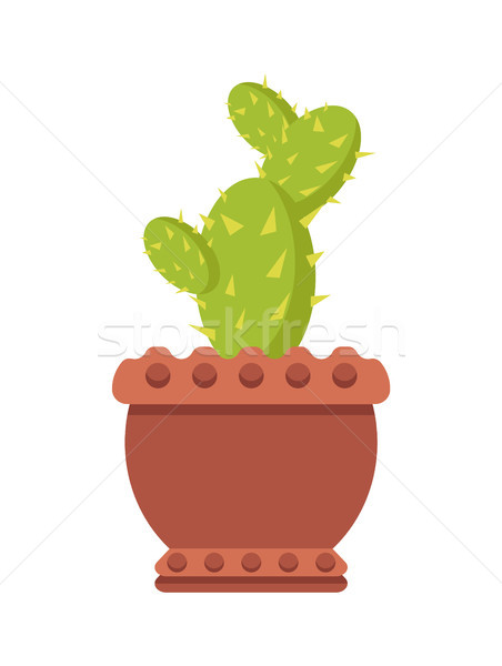 Cactus argile pot usine forte Photo stock © robuart