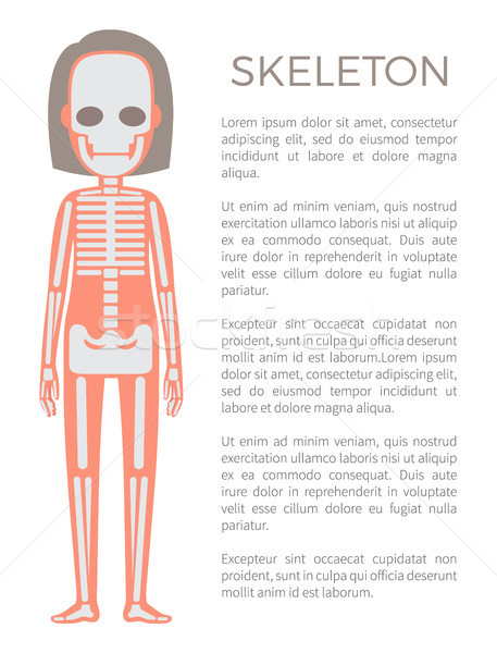 Skelet poster vrouw lichaam structuur Stockfoto © robuart