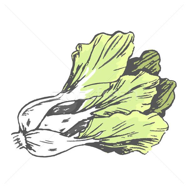 Romaine Lettuce Close up Graphic Illustration Stock photo © robuart