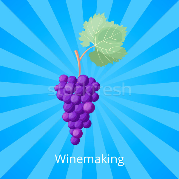 Winemaking Process Icon Vector Illustration Stock photo © robuart