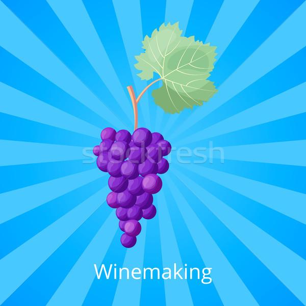 Vinificação processo ícone monte maduro roxo Foto stock © robuart