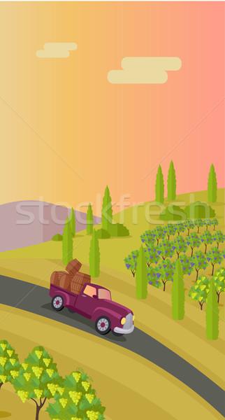 Foto stock: Vinha · uvas · folhas · ensolarado · carro