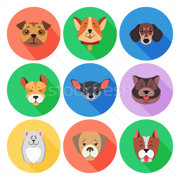 Set of Pedigreed Dogs on Colored Circle Icons Stock photo © robuart