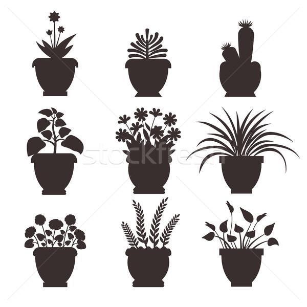 Ophiopogon Set Silhouette Vector Illustration Stock photo © robuart