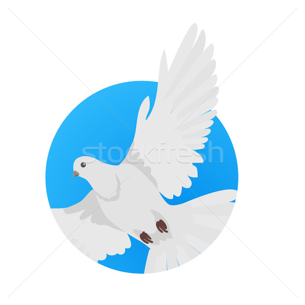Pigeon Flat Design Vector Illustration Stock photo © robuart