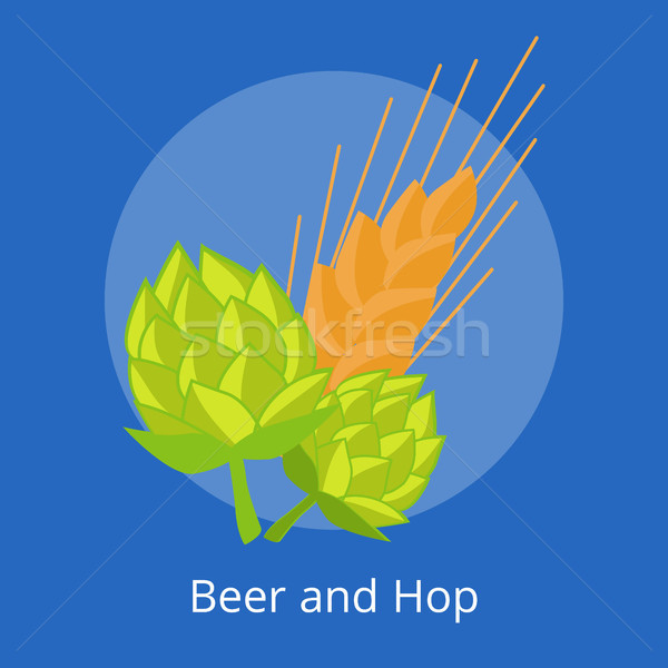 Hop and Golden Ears of Wheat Vector Illustrations Stock photo © robuart