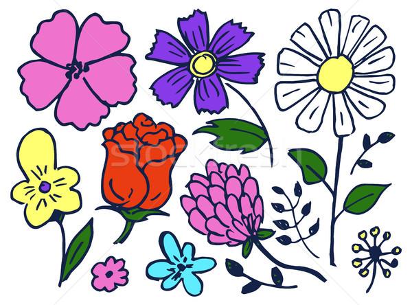 Flowers Hand Drawn Element Set Vector Illustration Stock photo © robuart