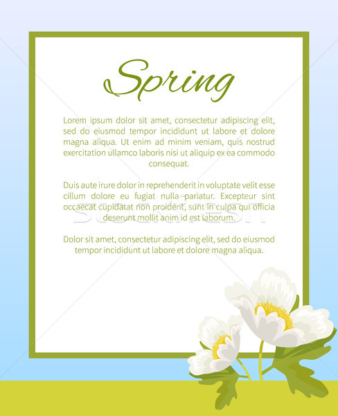 Spring Poster Place Text in Frame Anemone Snowdrop Stock photo © robuart