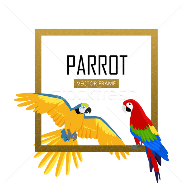 Papagáj terv vektor keret madarak amazóniai Stock fotó © robuart
