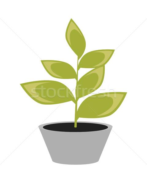 Stock fotó: Virágcserép · ikon · zöld · virág · szürke · edény