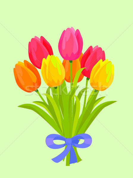 Bouquet of Colorful Tulips Bound with Blue Ribbon Stock photo © robuart