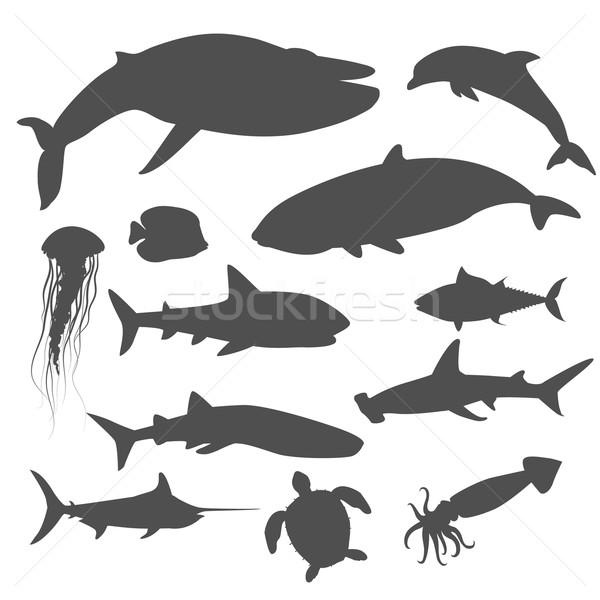 Marinha fauna conjunto aquático animais oceano Foto stock © robuart