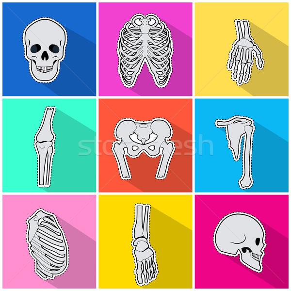 Iconen botten heldere skelet menselijke Stockfoto © robuart