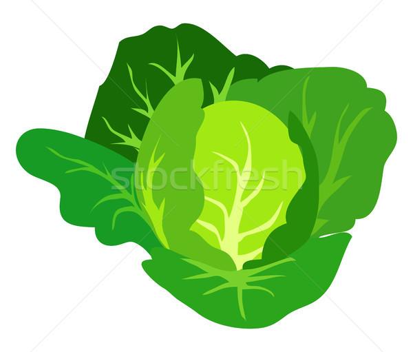 Verde repolho isolado branco saudável orgânico Foto stock © robuart