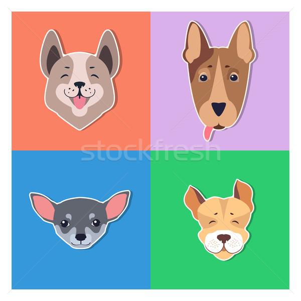 Cute Dogs Muzzles Cartoon Flat Vector Icons Stock photo © robuart