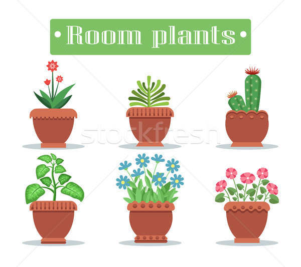 Room Plants in Pots with Blossom and Spikes Set Stock photo © robuart