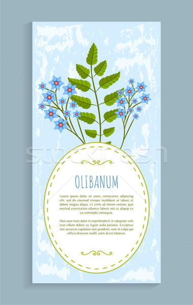 Olibanum Leaves and Flower Vector Illustration Stock photo © robuart