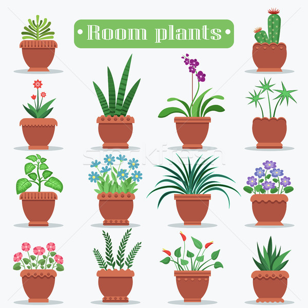 Decorative Room Plants in Clay Pots Illustrations Stock photo © robuart