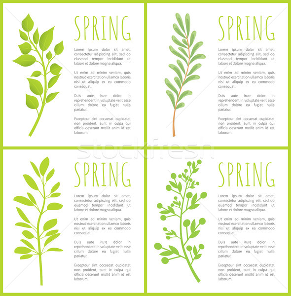 Spring Herbal Plants Posters with Sample Texts Stock photo © robuart