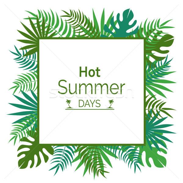 Caliente día de verano anunciante hojas verde Foto stock © robuart