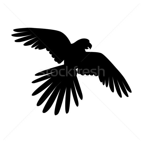 Vliegen papegaai ontwerp vector vogels amazone Stockfoto © robuart