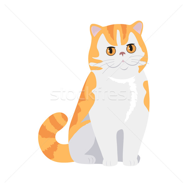 Red Exotic Cat Vector Flat Design Illustration Stock photo © robuart