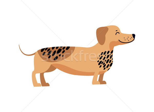 Dachshund Filled with Energy Vector Illustration Stock photo © robuart
