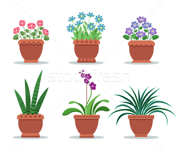 Room Plants in Clay Pots for Interior Design Decor Stock photo © robuart