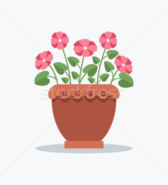 Planta prímula rosa flor pote Foto stock © robuart