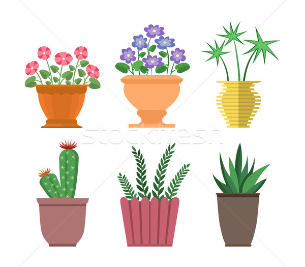 House Plants Types Collection Vector Illustration Stock photo © robuart
