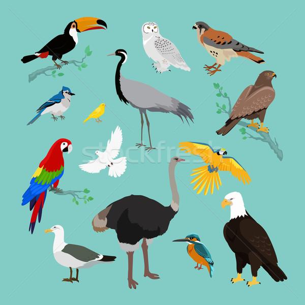 Collection of Various Birds Flat Design Stock photo © robuart