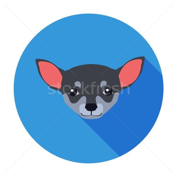 Small Muzzle of Chihuahua Dog Cartoon Drawing Stock photo © robuart