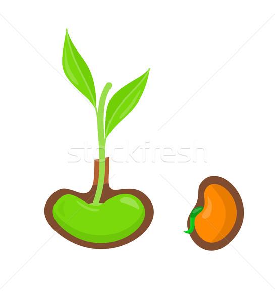植物 成長 種子 開始 新生 商業照片 © robuart