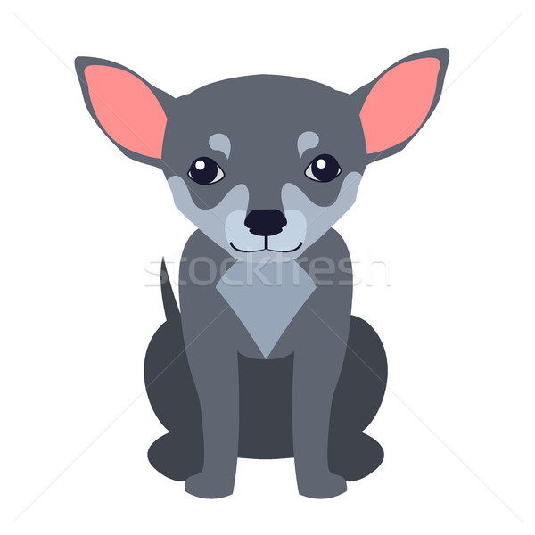 Cute Chihuahua Dog Cartoon Flat Vector Icon Stock photo © robuart