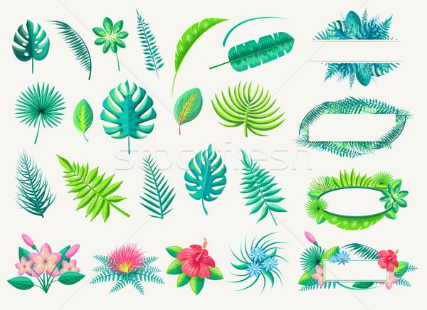 Tropicales hojas exótico flores establecer blanco Foto stock © robuart
