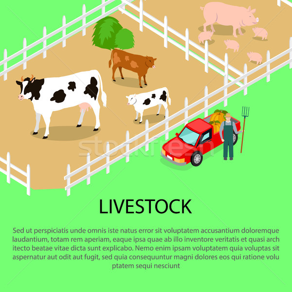 Farm with Livestock and Text Information below Stock photo © robuart