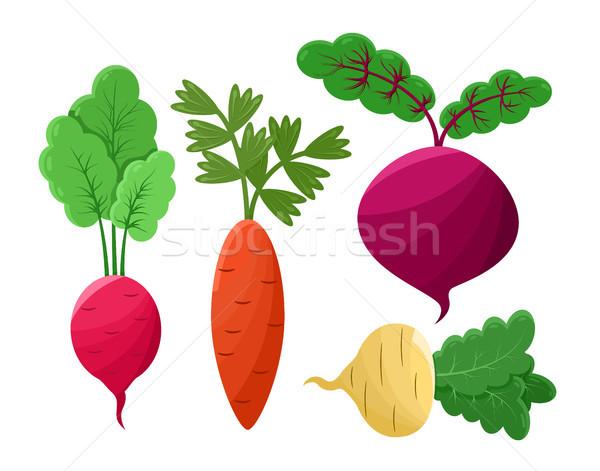 Beetroot and Radish Set Icons Vector Illustration Stock photo © robuart