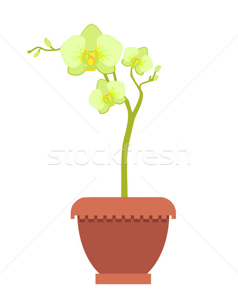 Yellow Oriental Orchid on Thin Stem in Clay Pot Stock photo © robuart