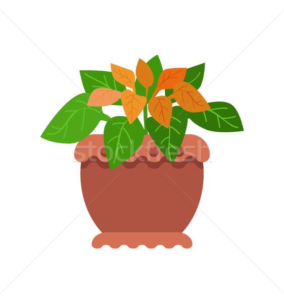 Pseuderanthemum Room Plant Vector Illustration Stock photo © robuart
