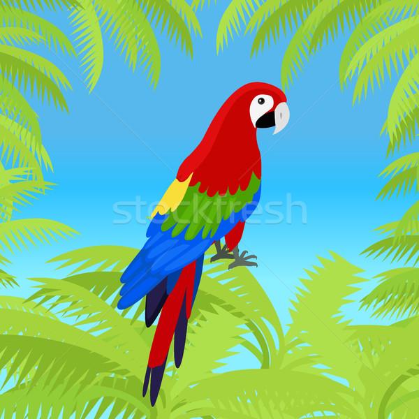 Papağan dizayn vektör çerçeve kuşlar amazon Stok fotoğraf © robuart