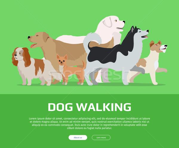 犬 徒歩 スタイル ベクトル ウェブ バナー ストックフォト © robuart