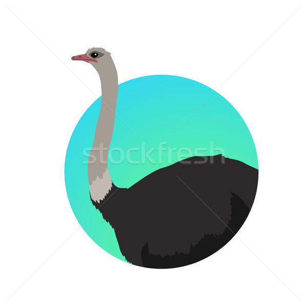 ダチョウ デザイン ベクトル 鳥 サバンナ アフリカ ストックフォト © robuart