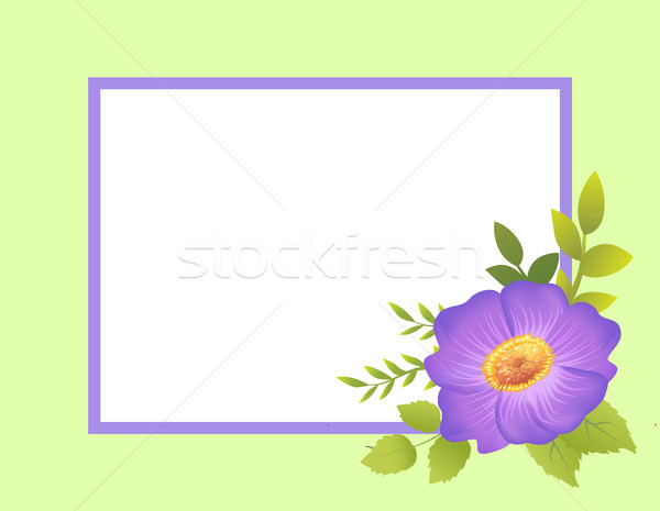 Empty Frame Decorated by Purple Viola Flower Bud Stock photo © robuart